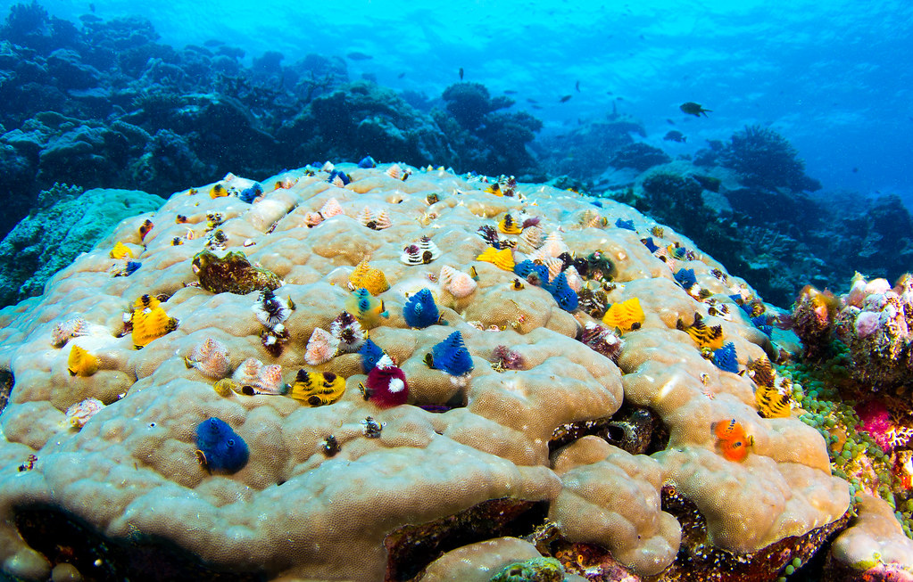 Los 10 Arrecifes De Coral Más Fascinantes Del Planeta