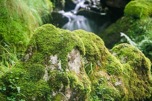 Parque Natural de #Gorbeia #DePaseoConLarri #Flickr - -908