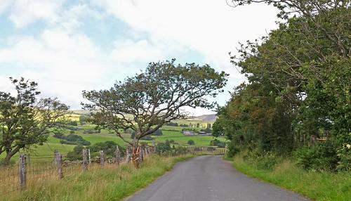Lane near Trawsfynydd