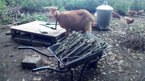 firewood July 16 (3)