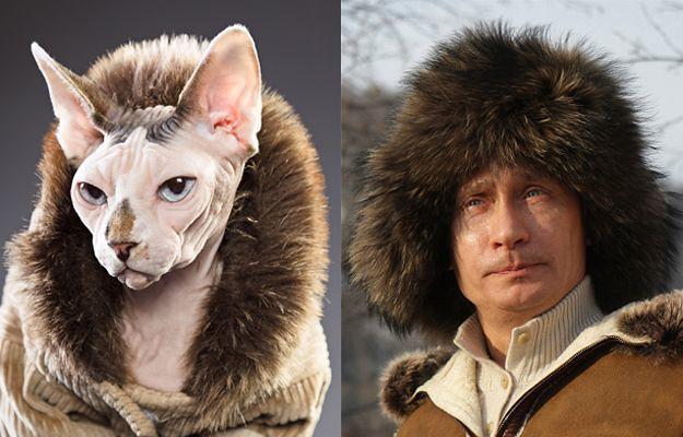 MACVLADIMIR THE CAT