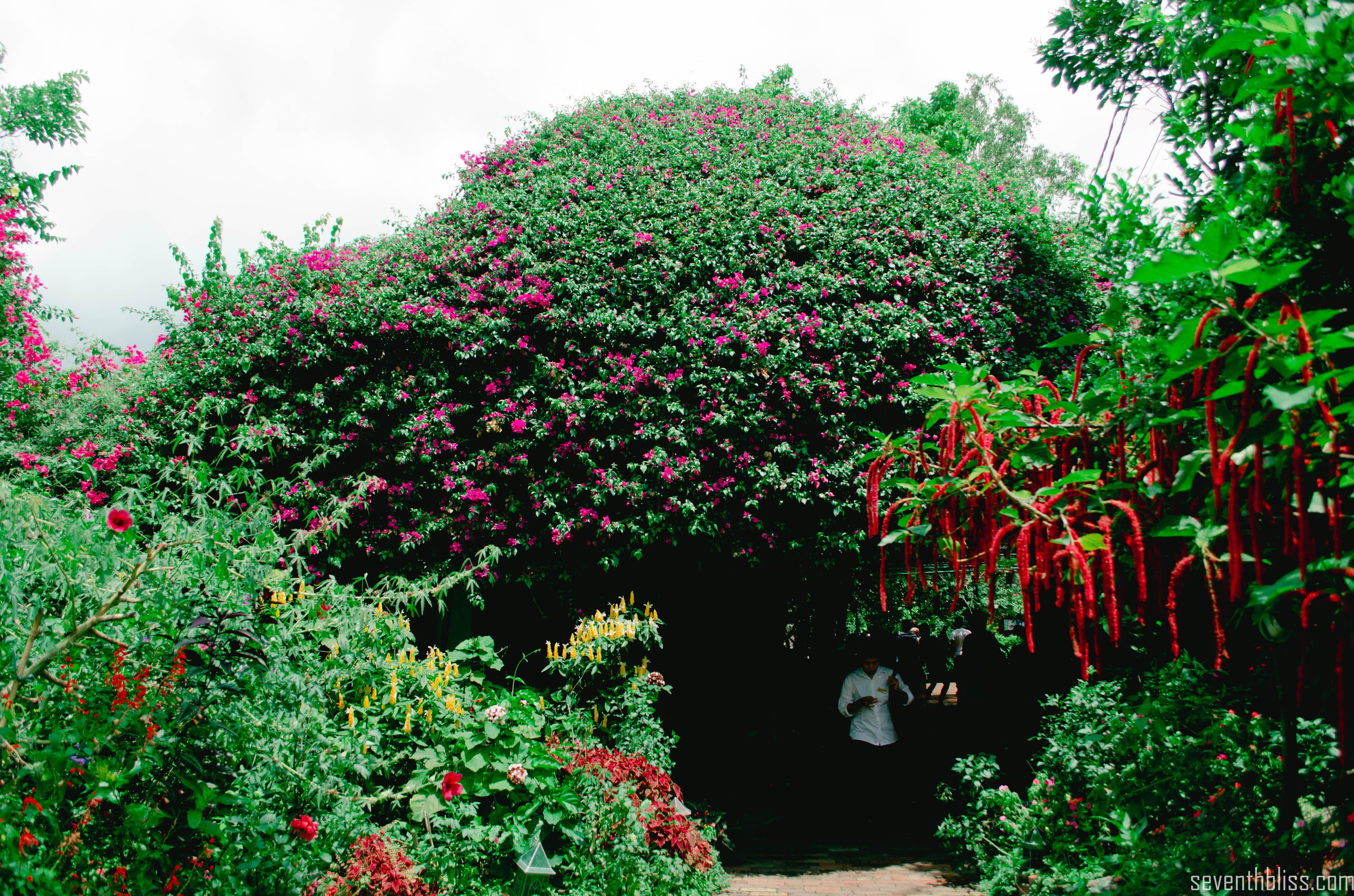 seventhbliss_sonyas_garden_tagaytay