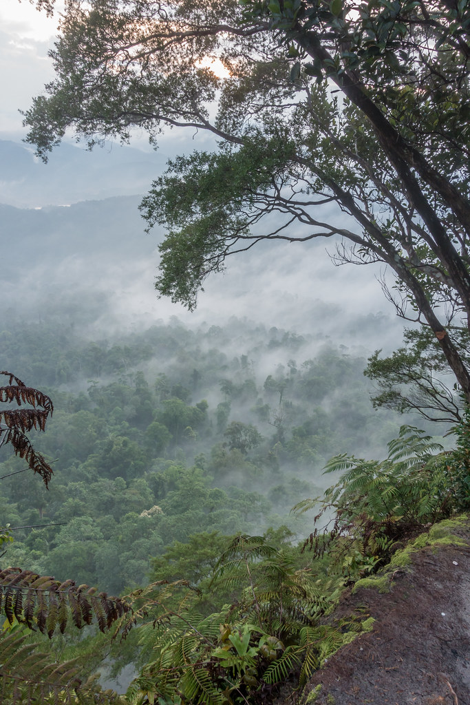 Gunung Panti summit view