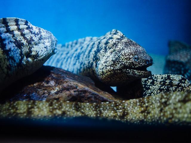 160810_takeshima_aquarium-11