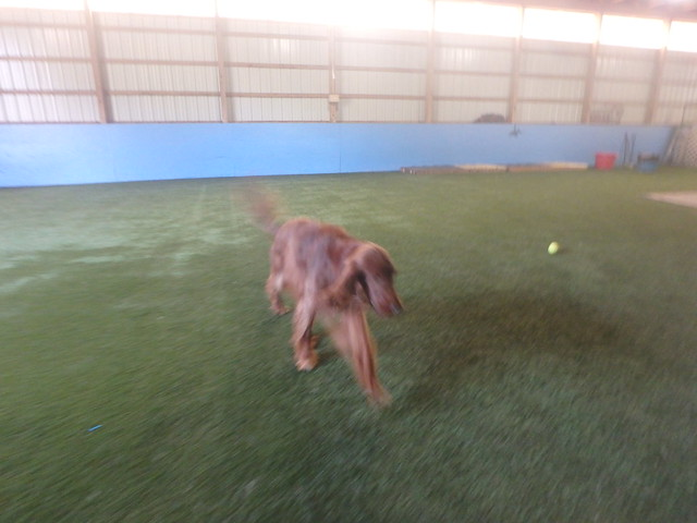 09/13/16 Tennis Ball Play :)