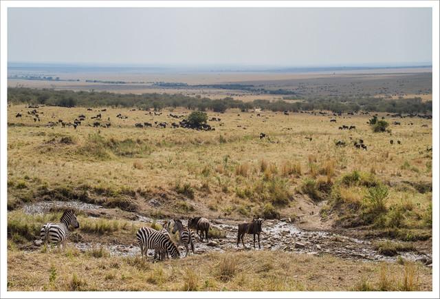 MasaiMara-168