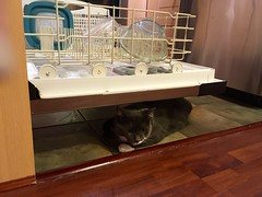 Crick is hiding under the open dishwasher