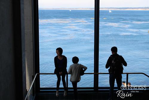 160703f Monterey Bay Aquarium _084