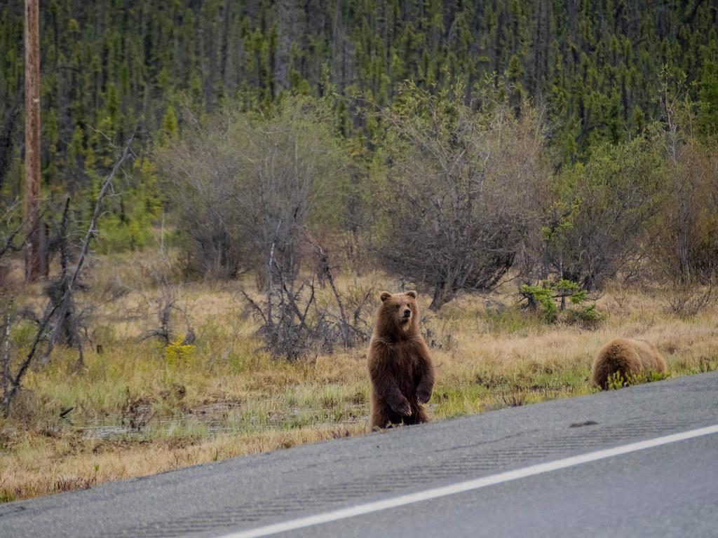 Bear Hug-5
