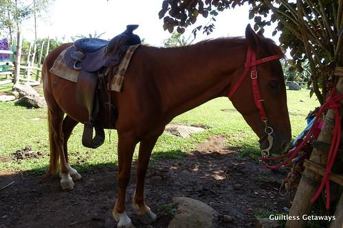 horseback-riding-dahilayan.jpg
