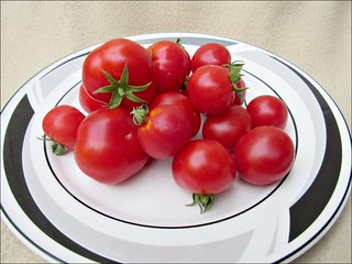 Tomato harvest, part 2