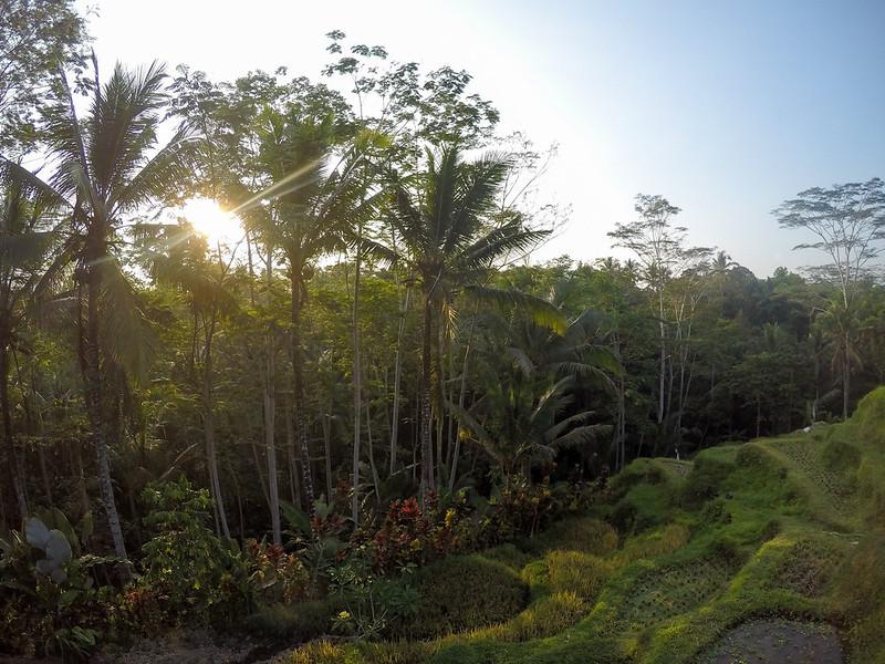28213318075 d80c13d78f c - REVIEW - Villa Amrita, Ubud (Bali)