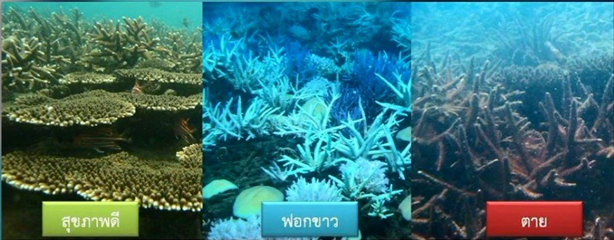 ปะการังฟอกขาว
