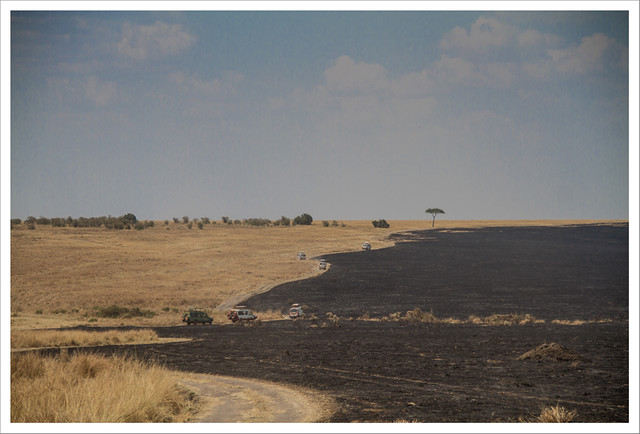 MasaiMara-163