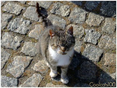 German Pussy Cat 102