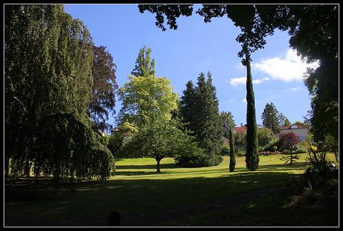 vue - Prunus serrula au centre
