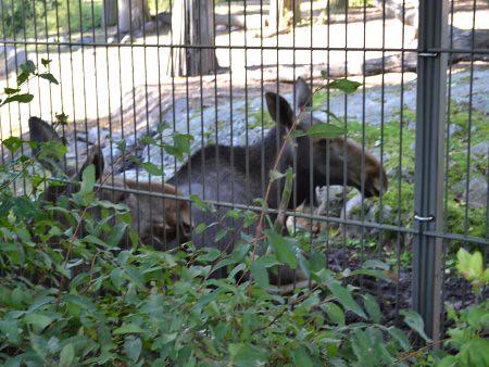 zoo helsinki obiective turistice 4