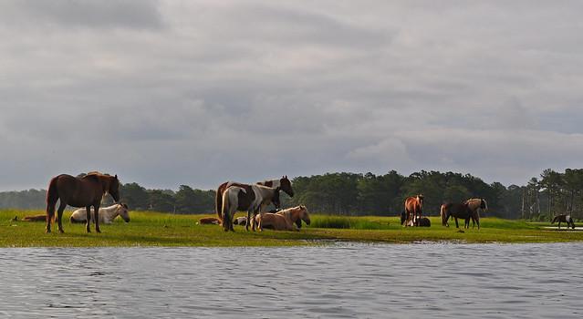 Horse Marsh (5)
