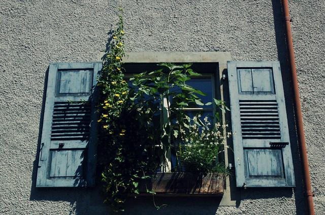 fenêtre florissant