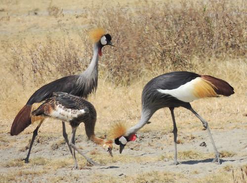 Tanzania Safari, Birds