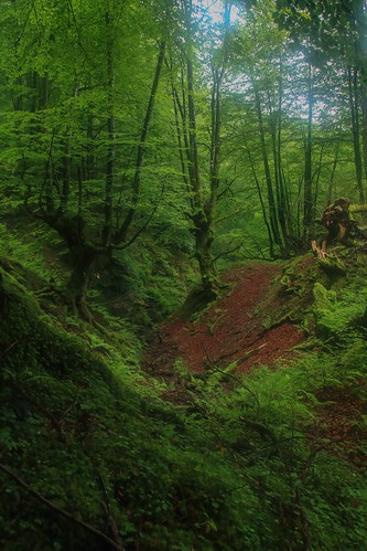 Parque Natural de #Gorbeia #DePaseoConLarri #Flickr - -877