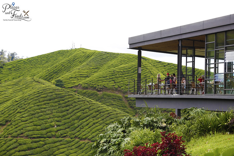 boh tea sungai palas cameron highlands