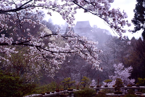 temple of blossoms