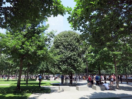 nyc352tree