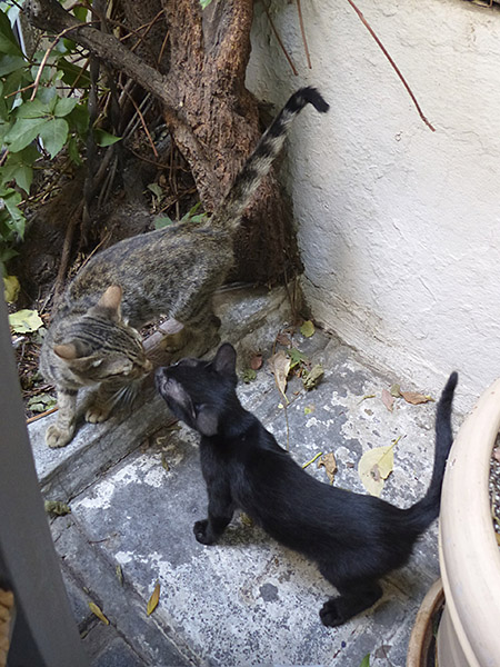 deux chats au café dioskouroi