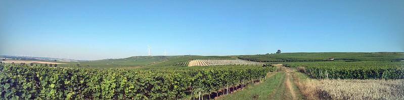 Panorama auf die Weinberge zwischen Selzen und Zornheim