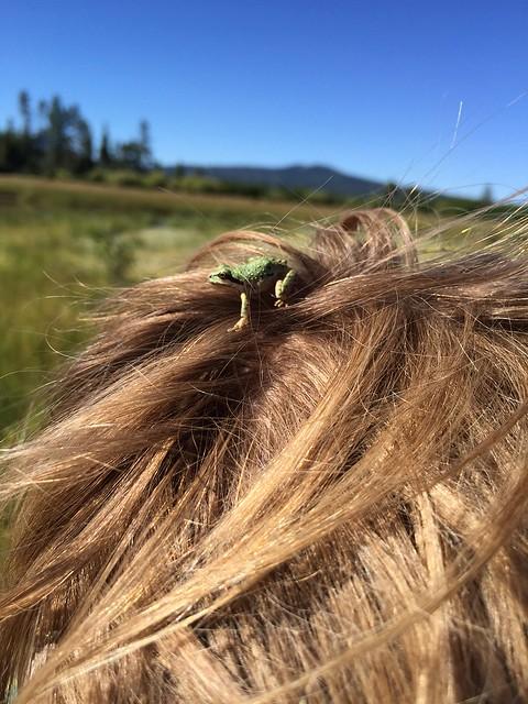 davis-lake-frog