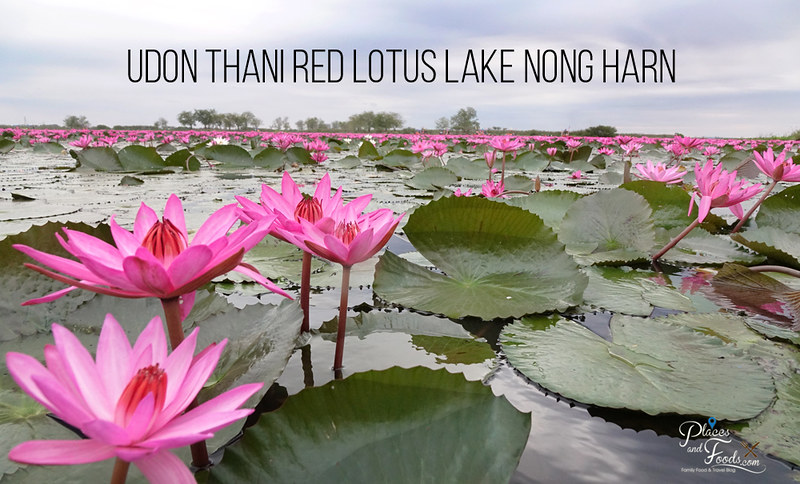 Udon Thani Red Lotus Lake Nong Harn