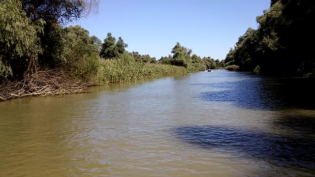 Danubioren delta