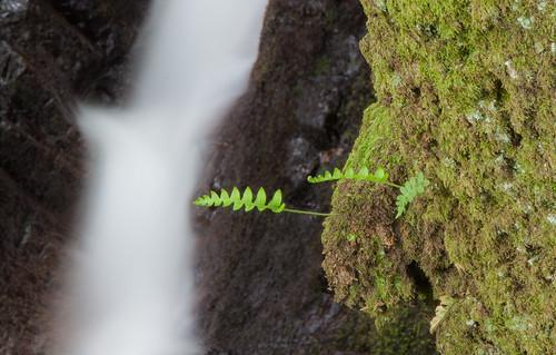 Parque Natural de #Gorbeia #DePaseoConLarri #Flickr - -7972