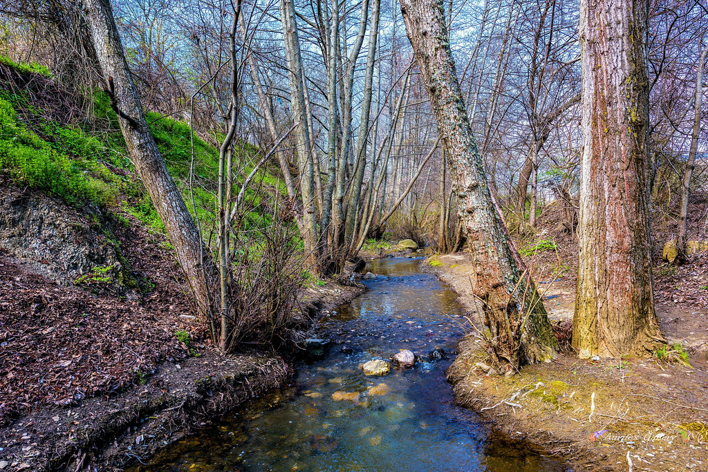 Mountain river in Spring