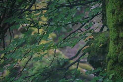 Parque Natural de #Gorbeia #DePaseoConLarri #Flickr - -866